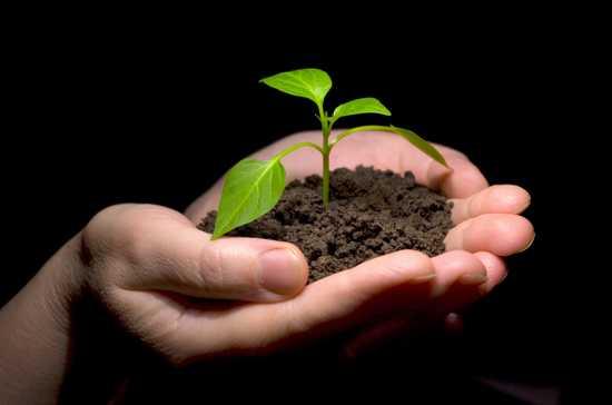 le germe du savoir revient à la lumière, offret par des mains inconnues